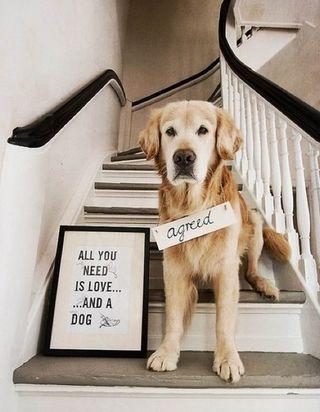 Lifestyledog